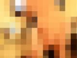 【個人撮影】潮吹き祭!4人のカップルがセックスパーティーでエンジョイ愛液滝【高画質】